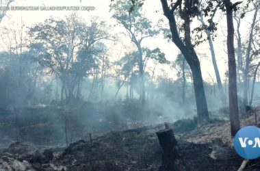 #VOA: 'Cambodia Burning' Documentary Shows Unfettered Logging Impact on Forest Ecosystem. #VOANews